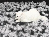 линька домашних кошек