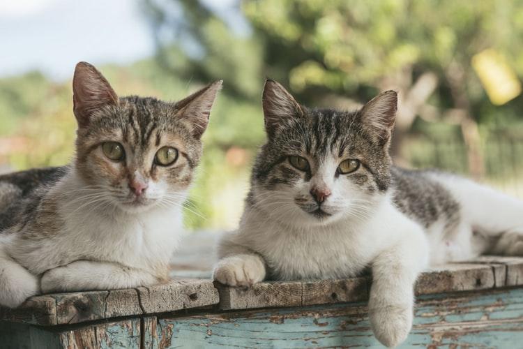 День кота по российской традиции отмечается 1 марта